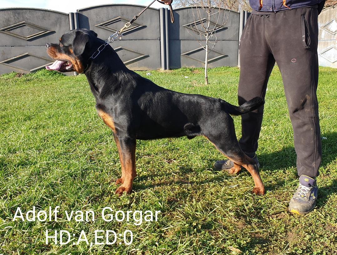 Adolf van Gorgar